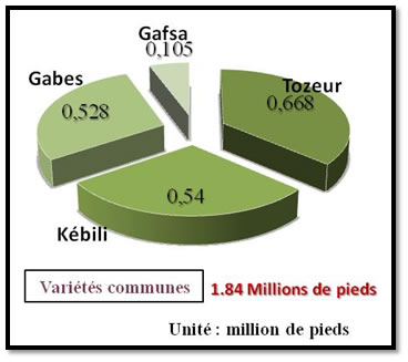 Répartition du nombre pieds des variétés communes dans les gouvernorats